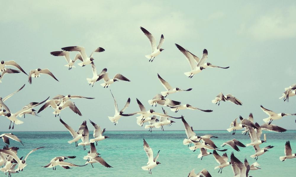 Tanulócsoportok, önismereti csoportok, együtt szálló madarak