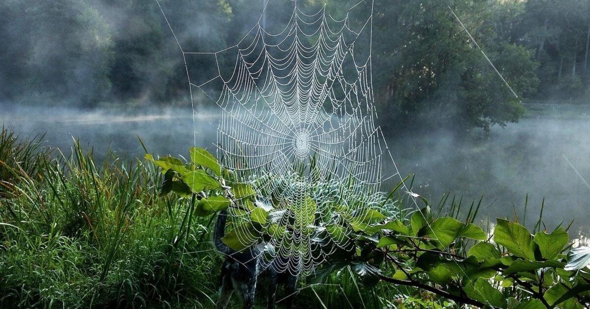 Tiszta kommunikáció, erőszakmentes kommunikáció, konstruktivitás, szavak hálója, pókháló
