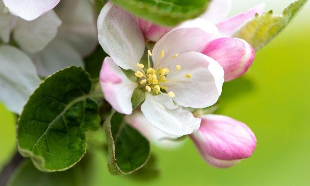 Almafa virága. Coaching csomagok és árak.
